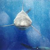 How To Make Shark Killing Popular